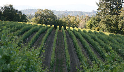 Studio Slips is located in California's beautiful Wine Country.